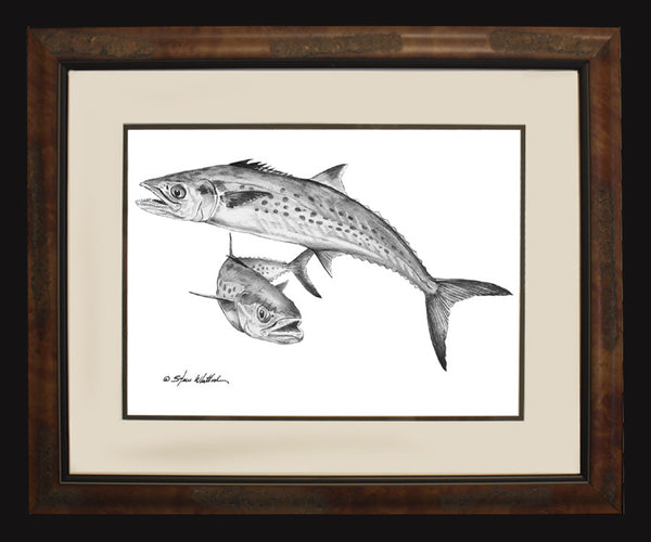 Pencil Art - Spanish Mackerel