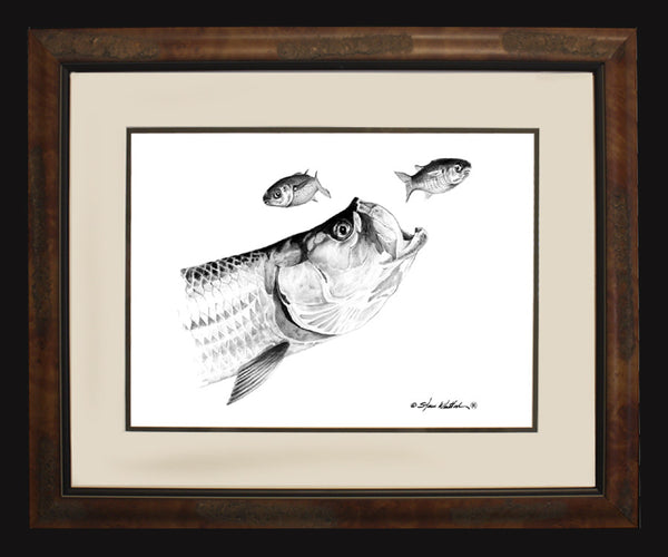 Pencil Art - Tarpon