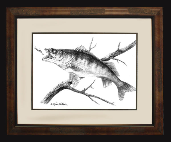 Pencil Art - Walleye