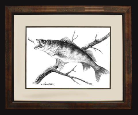 Walleye Pencil Illustration
