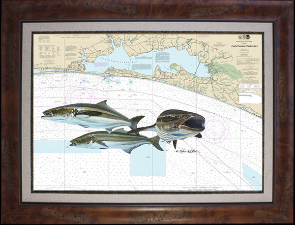 Destin Cobia Chart Art