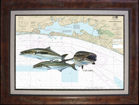 Chart Art - Destin Cobia