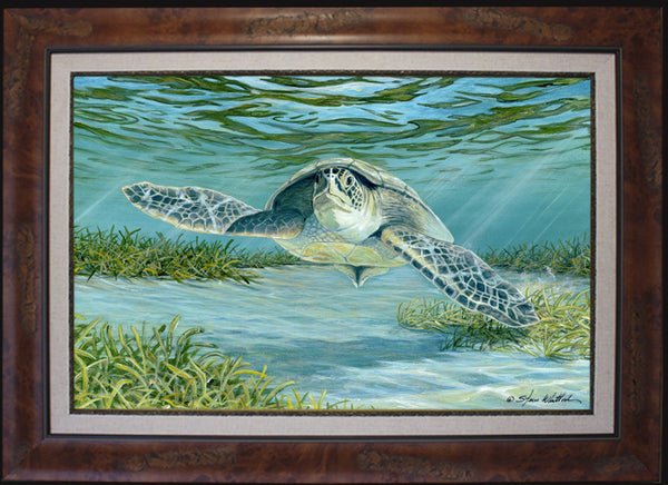 Fine art sea turtle steve whitlock game fish art for Turtle fish games