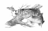 Pencil Art - Ambush (Largemouth Bass)