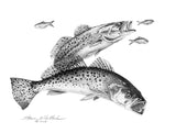 Pencil Art - Spotted Sea Trout