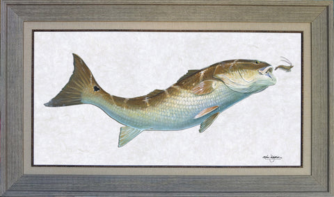 Acrylic Illustration - Redfish