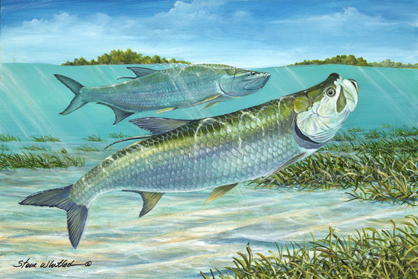SALE - Silver Kings Tarpon Fine Art