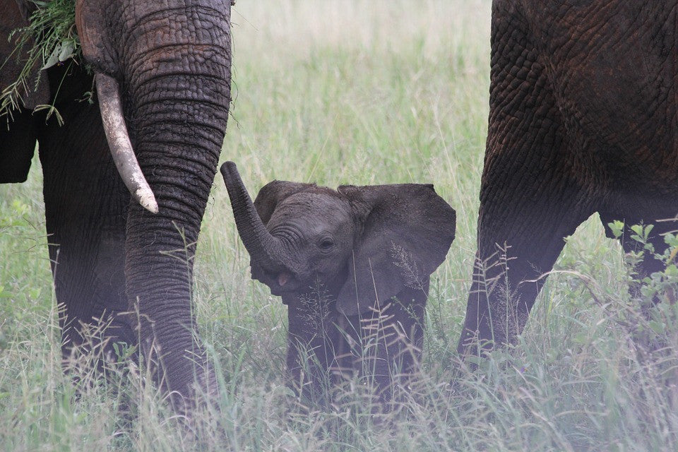 5 Cool And Fun Facts About Elephants