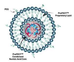 ProFECT(siRNA) Plus: Translational Lipid Nanoparticles for siRNA Encapsulation and Delivery