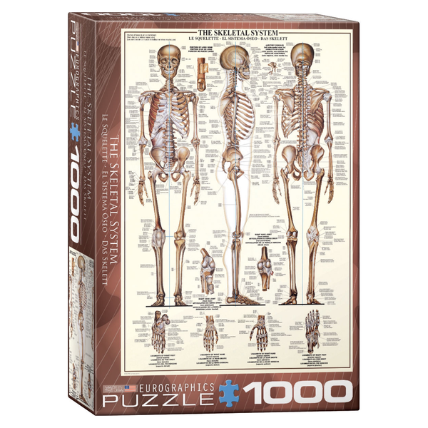 The Skeletal System 1000PC Puzzle