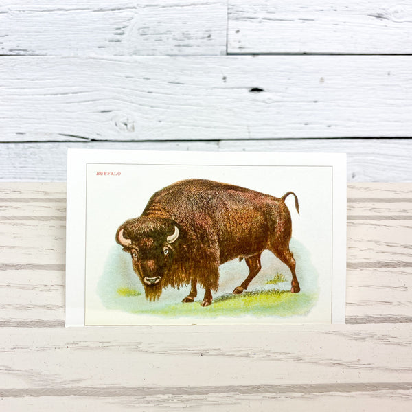 Found Image Buffalo Postcard
