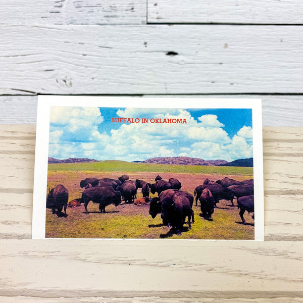 Buffalo in Oklahoma Postcard