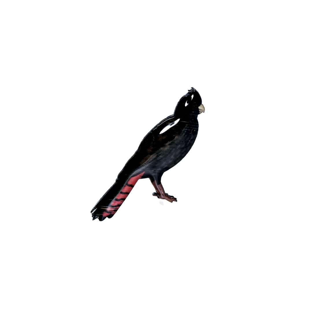 Cockatoo - Red-tailed Black Cockatoo Brooch