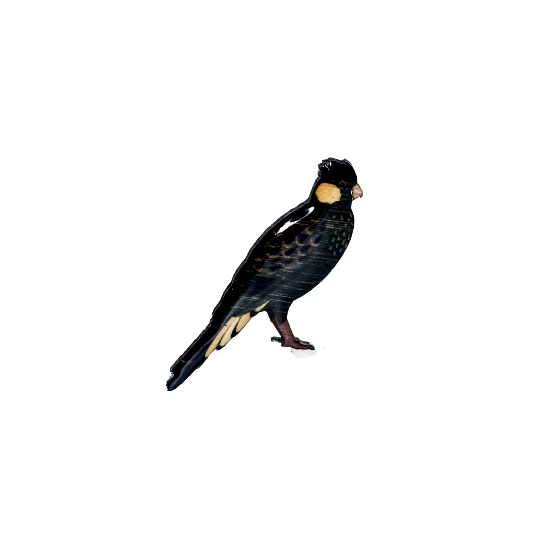 Cockatoo - Yellow-tailed Black Cockatoo Brooch