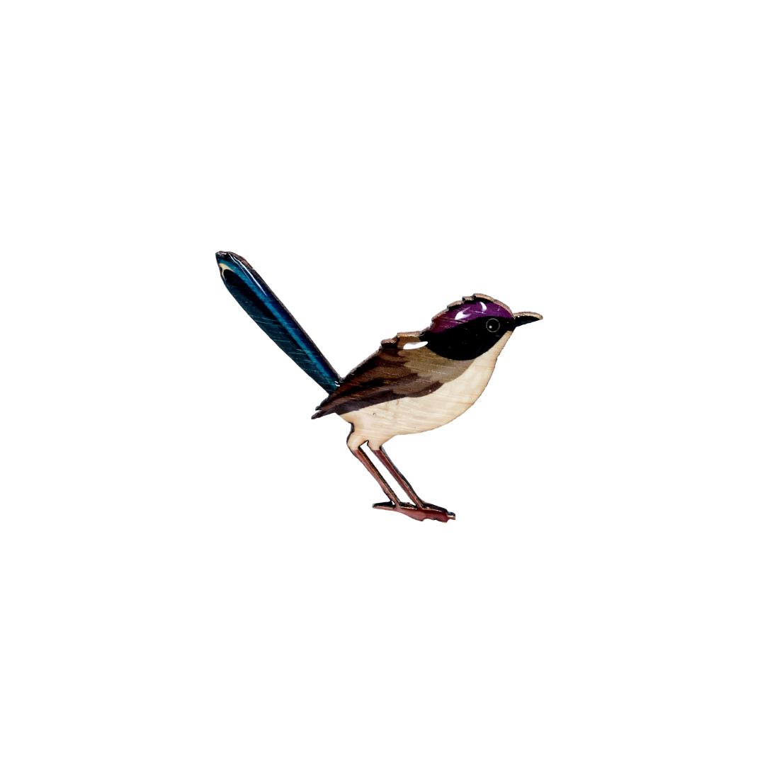 Fairy-Wren  -  Purple-crowned Fairy-Wren Brooch