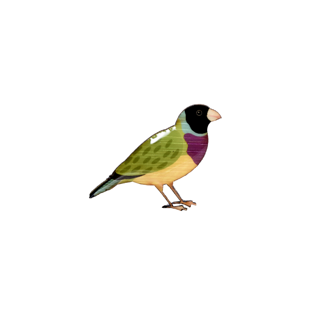 Finch - Gouldian Finch II Brooch