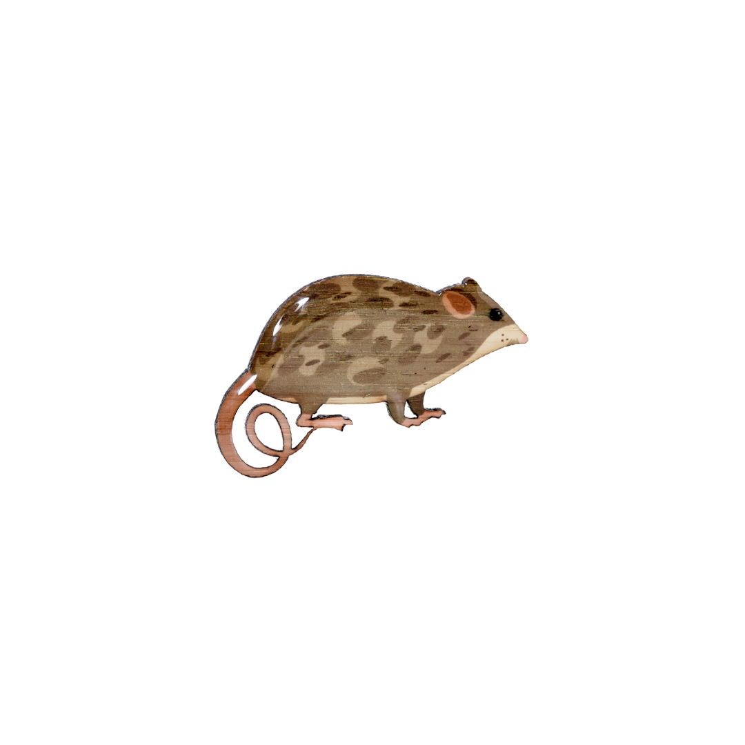 Possum - Mountain Pygmy Possum Brooch