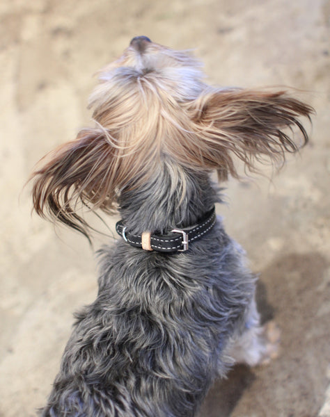 Benji + Moon | Handcrafted Leather dog collars black and beige small Yorkie