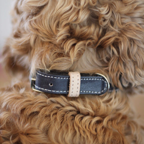 Benji + Moon | Leather dog collar black and beige