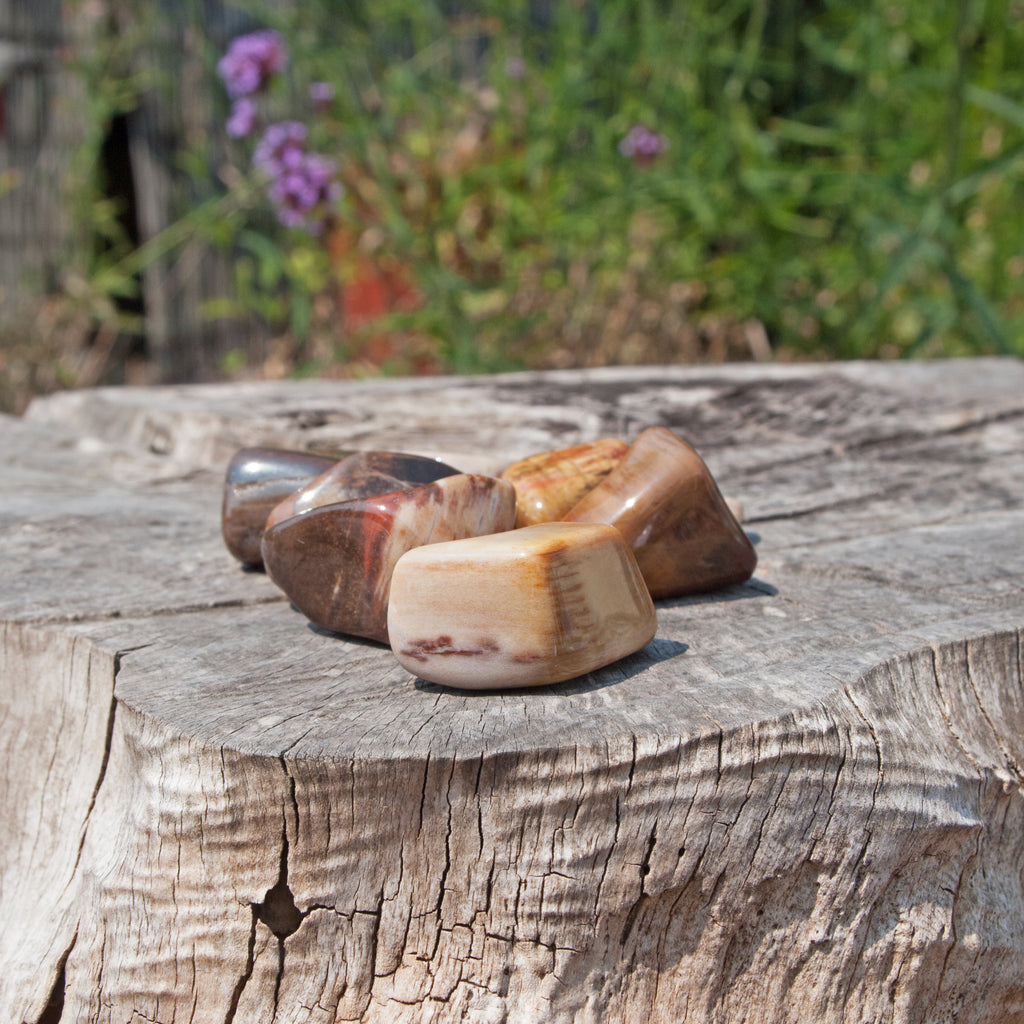 Petrified Wood Tumblestone