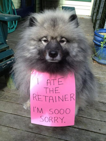 Dogs love to chew on clear aligners - keep yours safe with the right retainer case!