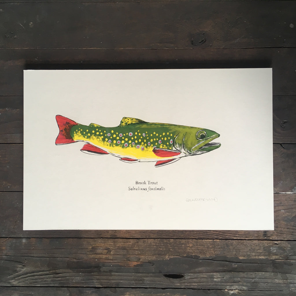 brook trout art print fish risograph