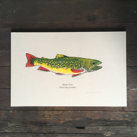 Brook Trout - Print