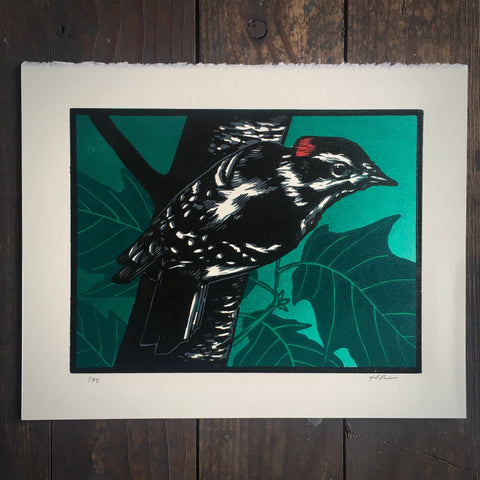 Downy Woodpecker - Print