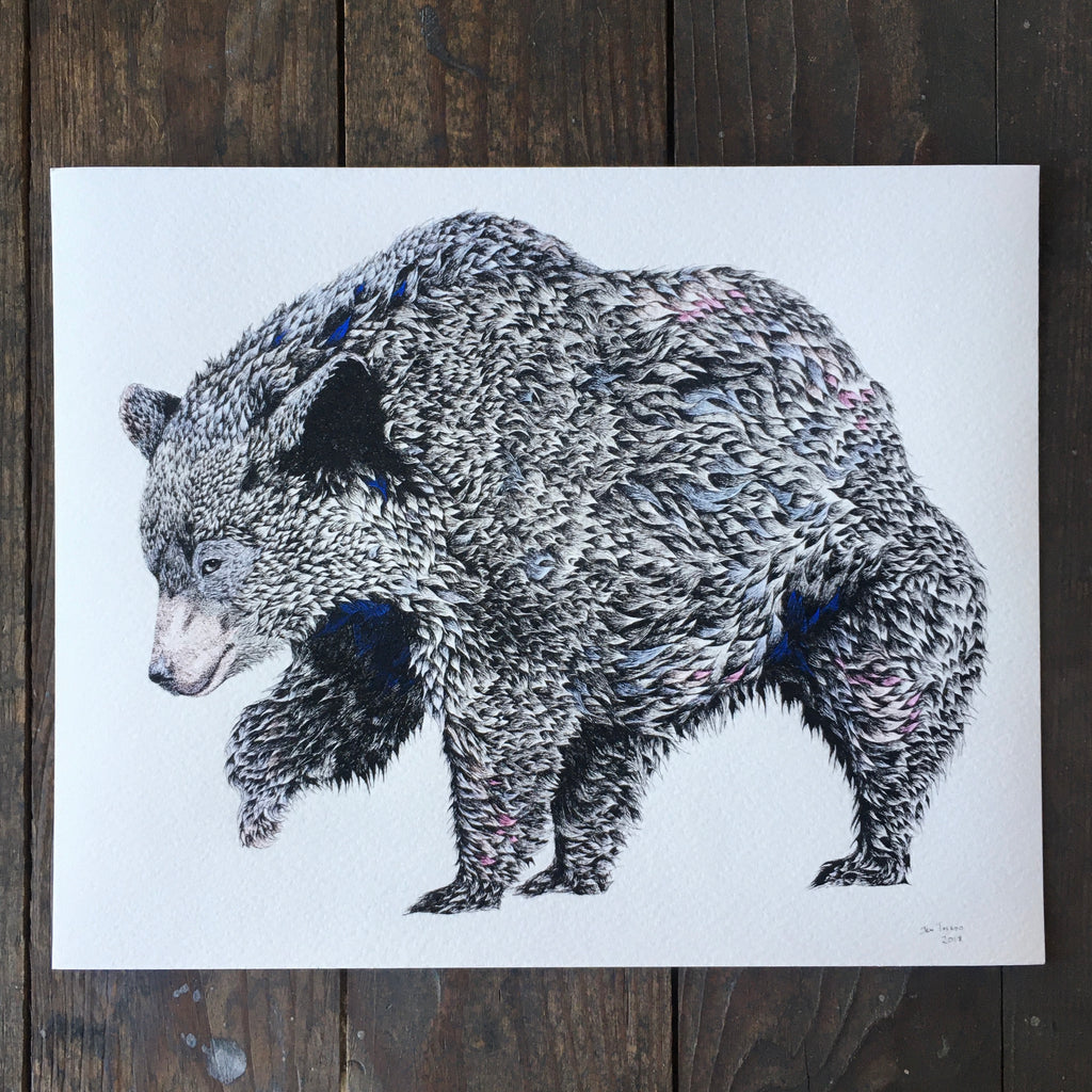 Black Bear Of Panthertown - Print