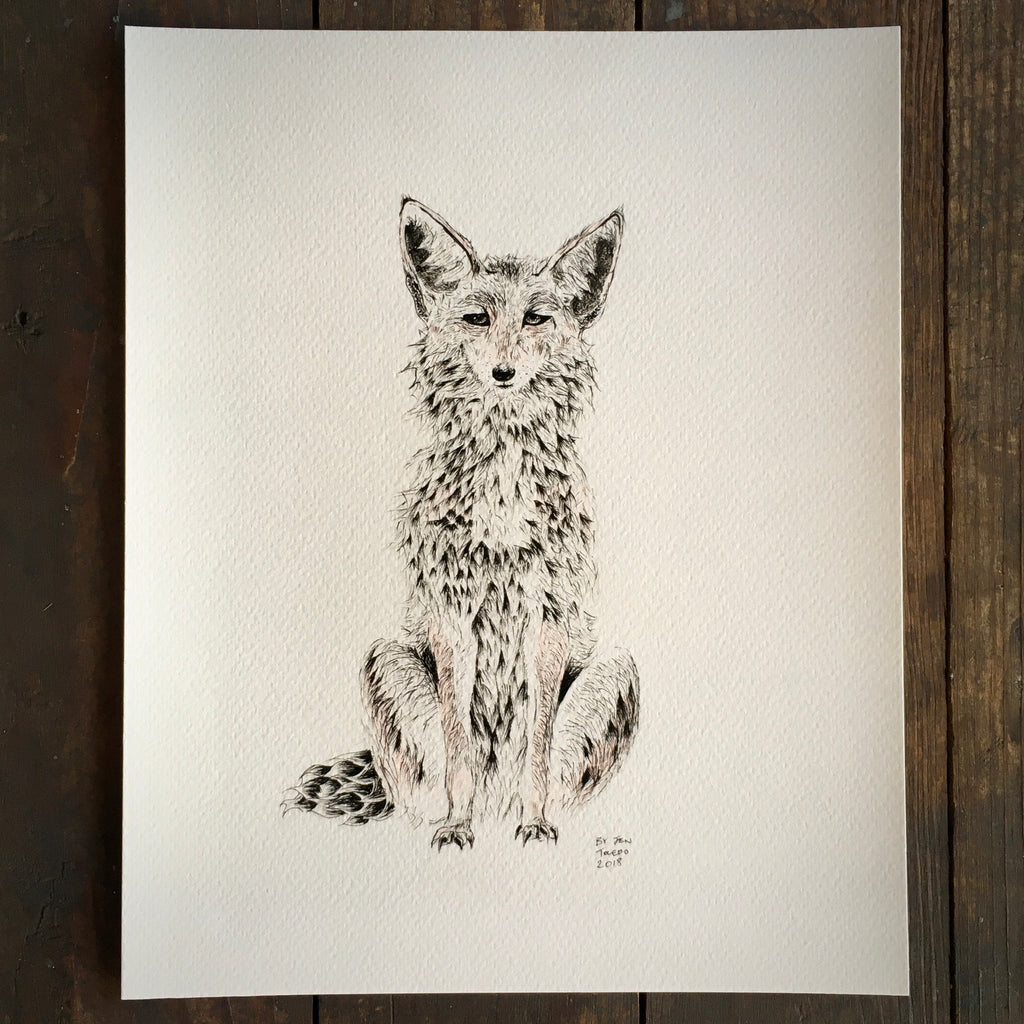 Coyote - Archival Print