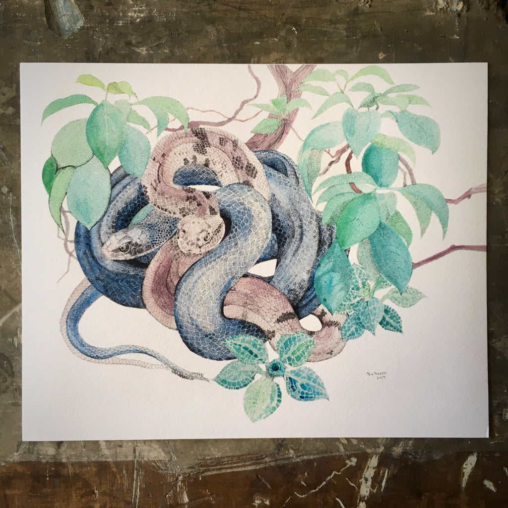 Black Snake, Timber Rattler, Mountain Laurel & Rattlesnake Lily - Archival Print