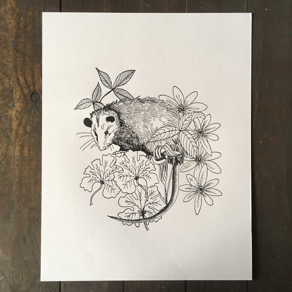 Possum With Native Plants - Print