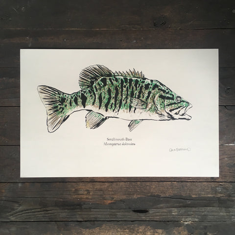 Smallmouth Bass - Print