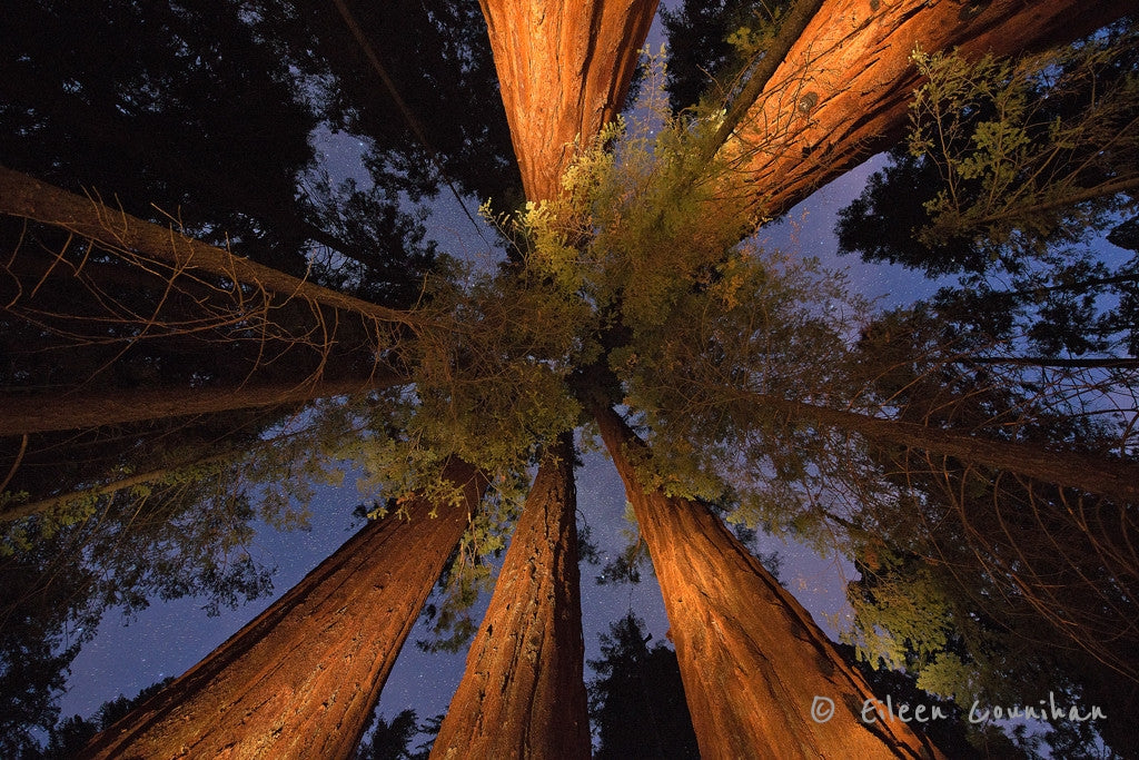 Indigo Woods, Sequoia National Forest