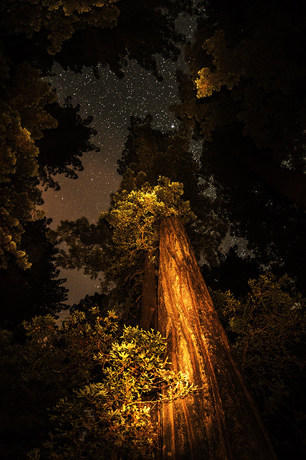 Humboldt Redwoods 4, California