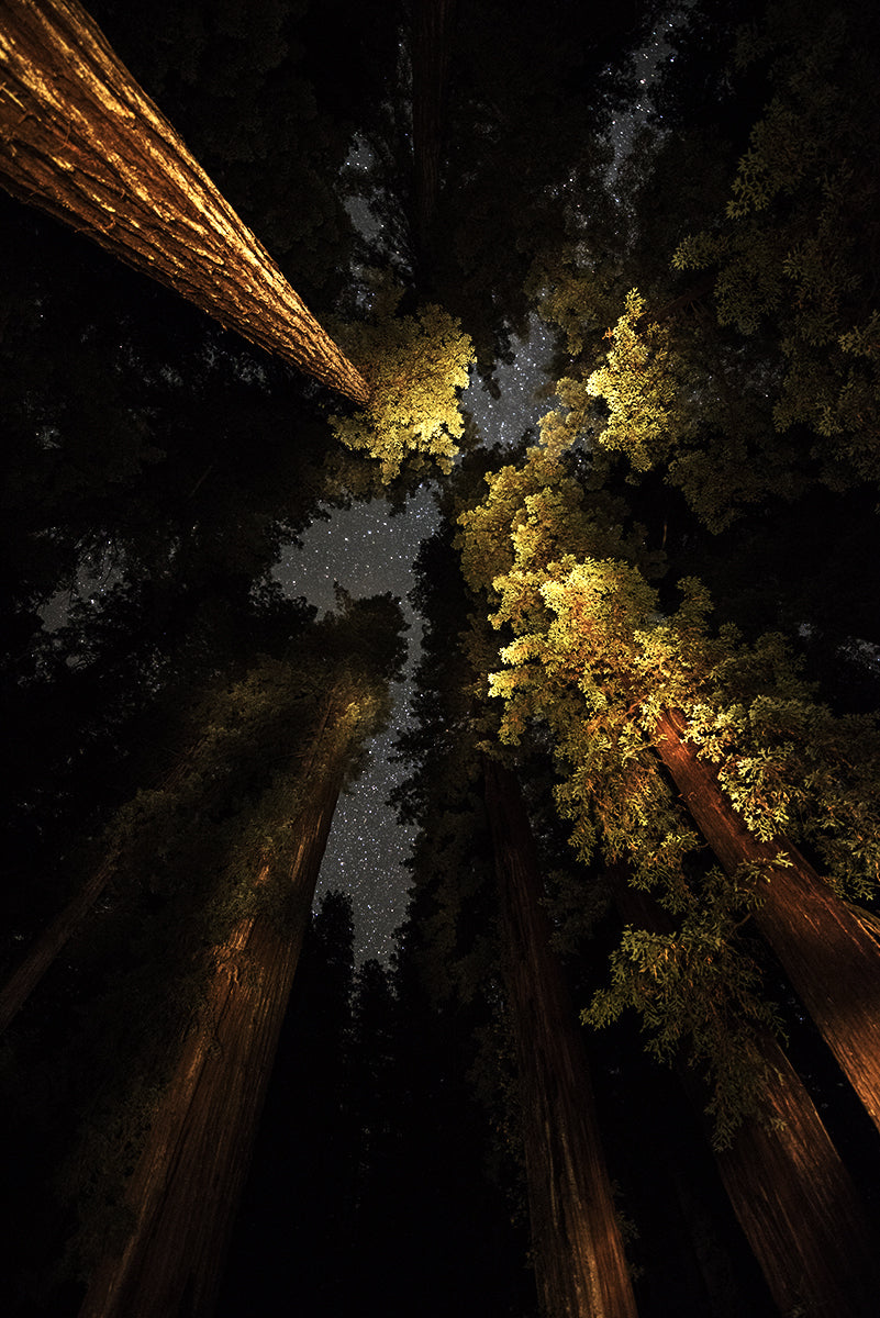 Humboldt Redwoods 1, California