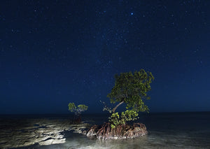 Mangrove, Florida Keys