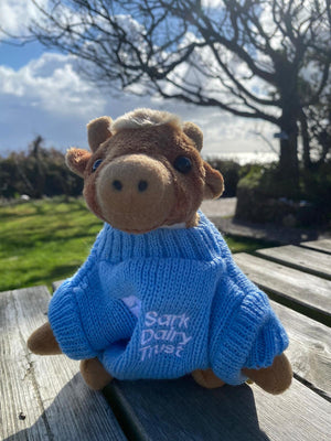 Sark Dairy Trust Cow with Jumper