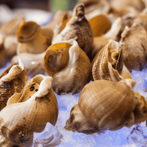 Cooked Whelks - Bulots frozen