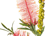 F-RT-5427RD Bottle Brush / Callistemon Red 47cm