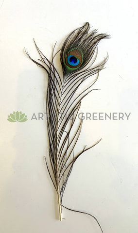 ACC0044P Peacock Feather 20-30cm
