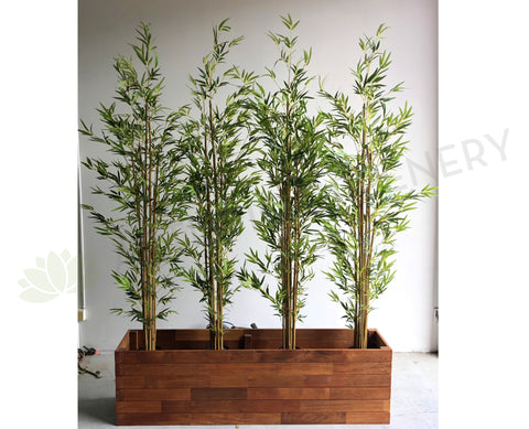 For Hire - Bamboo Plant in Planter 150cm Width
