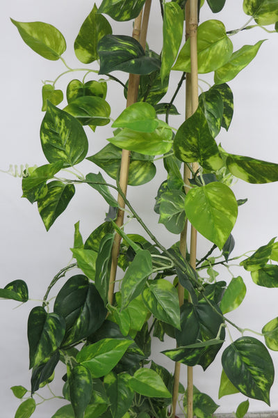 CP-2_Climbing_Plant_Gold_Pothos_99_set_zoom_grande Tall Decorative Vases With Flowers on tall flower pot, tall white vase, tall metal flower vases, tall decorative metal vase, tall flower stand, tall copper vase, tall decorative lamp,