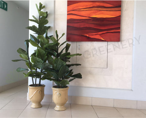 Apartment Common Area - Fiddle Leaf Fig - Catalina @ Crawley