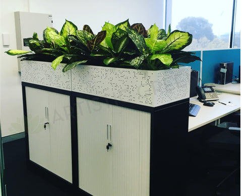 CrossCorp Business Advisors - Dieff. Plants for Tambour Units