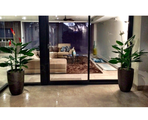 Artificial Plants Indoors & Outdoors - Suburban Home Perth