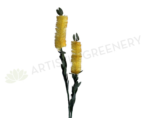 F-ASB-B-01 Bottle Brush 75cm Cream Silk Native Flowers Australia | ARTISTIC GREENERY