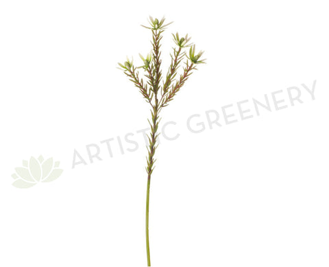 F-RT-5450CGR Leucadendron Spray 70cm Cream Green