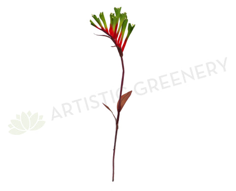 F0104 Kangaroo Paw Spray 65cm Red with Green Tip