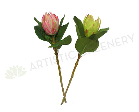 F0112 Possum Magic Protea 50cm (Green or Pink)